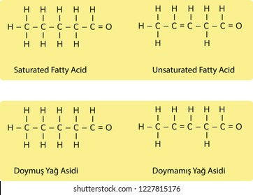 saturated and unsaturated fatty acid