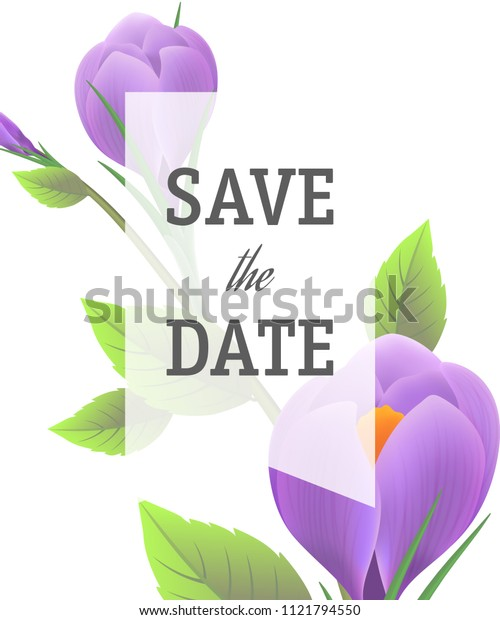 Save the date template with purple crocuses on white background with transparent frame. Handwritten text, calligraphy. Event concept. Can be used for invitation, flyer, brochure