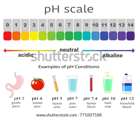 Scale Ph Value Acid Alkaline Solutions Stock Vector Royalty Free