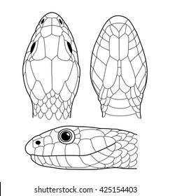 Scales from Grass snake (Natrix natrix)