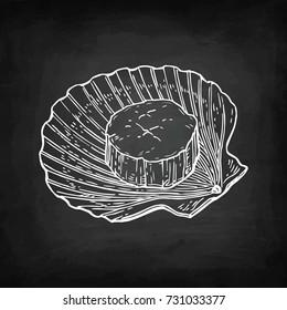 Scallop. Chalk sketch on blackboard background. Hand drawn vector illustration. Retro style.