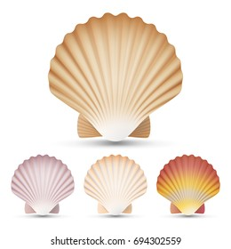 Scallop Seashell Set Vector. Exotic Souvenir Scallops Shell Isolated On White Background Illustration