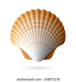 Scallop seashell. Vector.