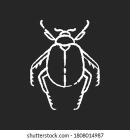 Scarab beetle chalk white icon on black background. Small arthropod, egyptian bug, desert inhabitant. Zoology, entomology, ancient Egypt culture. Dung beetle isolated vector chalkboard illustration