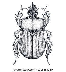 Scarab beetle tattoo. Dot work tattoo. Insect. Symbol of eternal life, resurrection, revival. Black and white drawing. Vector tattoo