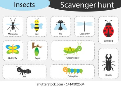 Scavenger hunt, insects theme, different colorful pictures for children, fun education search game for kids, development for toddlers, preschool activity, set of icons, vector illustration