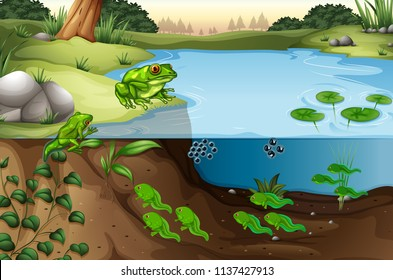 Scene of frogs in a pond illustration