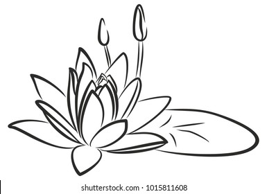 Scetch of water lilly