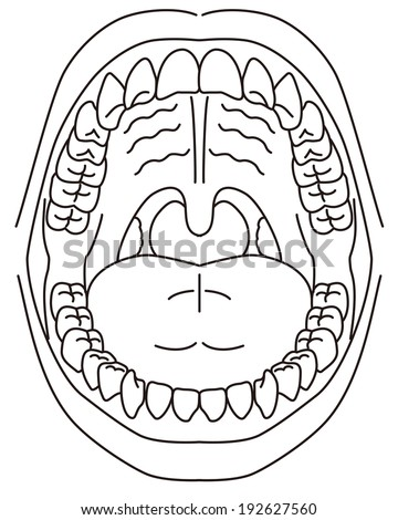 Schematic Diagram Oral Cavity Stock Vector Royalty Free 192627560