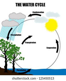 Schematic representation of the water cycle in nature,vector illustration (Helpful for Education & Schools)
