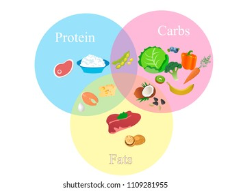 Scheme of the division of products by macronutrients. Vector design