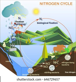 Water cycle images stock photos vectors shutterstock scheme of the nitrogen cycle flats design vector illustration ccuart Images