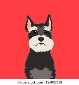 Schnauzer, The buddy dog