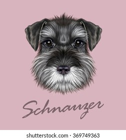 Schnauzer Dog Portrait. Vector illustrated Portrait of  Black Schnauzer on pink background.