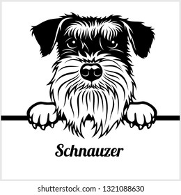 Schnauzer - Peeking Dogs - breed face head isolated on white - vector stock