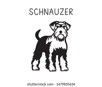 Schnauzer vector illustration in black and white