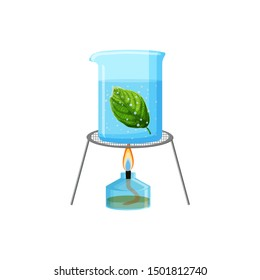 School laboratory experiment clip art. Starch or photosynthesis test. Alcohol burner, tripod and glas container with boiling water and green leaf isolated on white background. Vector illustration.