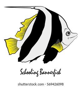 Schooling  Bannerfish Saltwater Aquarium Fish vector illustration