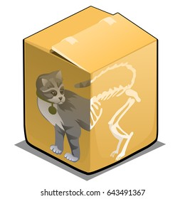 Schrodinger's cat in the box isolated on white background. Vector cartoon close-up illustration.