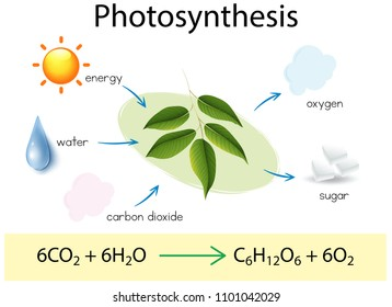 A Science Education of Photosynthesis illustration