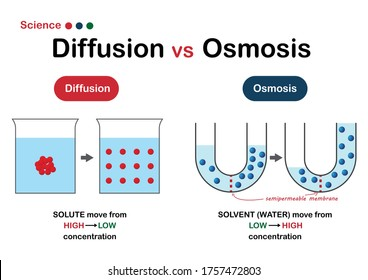 Science graphic show difference of diffusion and osmosis