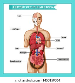 Scientific medical illustration of human body anatomy illustration