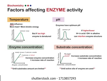 scientific poster show biochemistry explain about factors that affecting enzyme activity