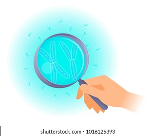The scientist holds a magnifier and researches x, y chromosome. Flat vector illustration of hand holding a magnifying glass and human chromosomes. Science, medical, genetics, and reproduction concept.