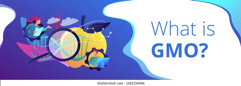 Scientists working with magnifier and apple DNA. Genetically modified foods, GM foods and genetically engineered foods concept on white background. Header or footer banner template with copy space.