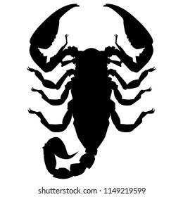Scorpio  Emperor scorpion Arachnida Scorpiones  Scorpionidae Pandinus vector insect black silhouette