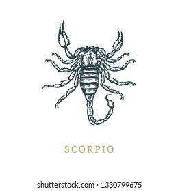 Scorpio zodiac symbol, hand drawn in engraving style. Vector graphic retro illustration of astrological sign Scorpion.