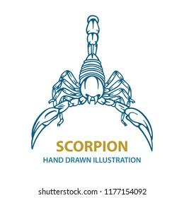 Scorpion. Hand drawn scorpion vector illustration.  Scorpion tattoo. Vector illustration.