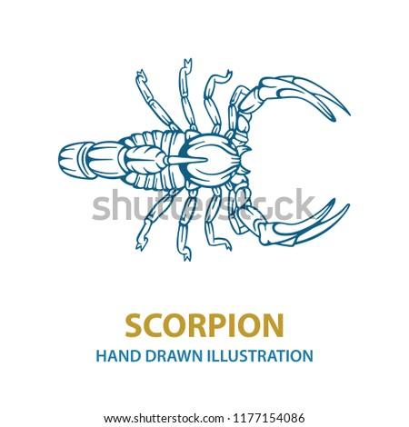 10da4737d8beb Hand drawn scorpion vector illustration. Scorpion tattoo. Vector  illustration.