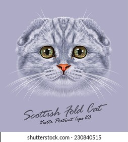Scottish fold cat animal cute face. Vector happy silver tabby stripe pattern Scottish fold kitten head portrait. Realistic fur portrait of scottish green eyes kitty isolated on grey background.