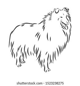 Scottish shepherd collie dog sketch, contour vector illustration