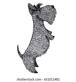 Scottish Terrier Hand drawing Isolated Object