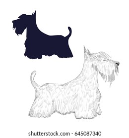 Scottish terrier sketch and silhouette. Hand drawn dog isolated on white background.