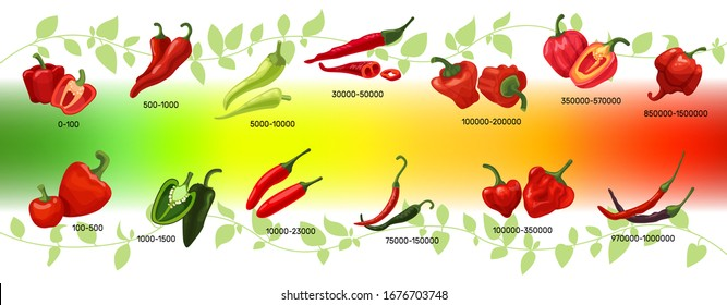 Scoville scale of chilli peppers infographic vector illustration. Heat units for red and green chili pods, spicy, mild and extreme hot taste level score. Scalable spice peppers on multicolor gradient