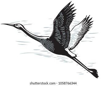 Scratch board illustration of flying crane
