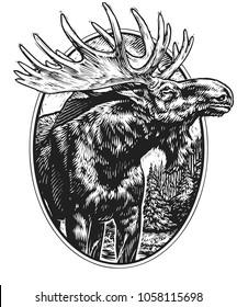 Scratch board illustration of moose