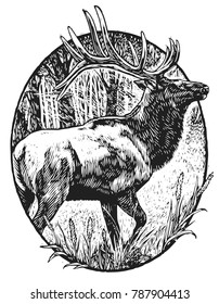 Scratchboard illustration of elk
