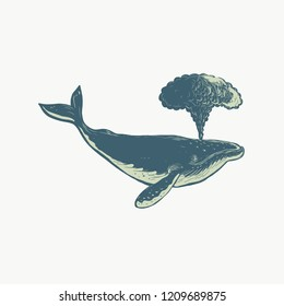 Scratchboard style illustration of A humpback whale blowing water thru blowhole done on scraperboard on isolated background.