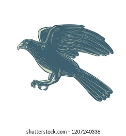 Scratchboard style illustration of northern goshawk bird, a medium-large raptor in the family Accipitridae, flying side done on scraperboard on isolated background.