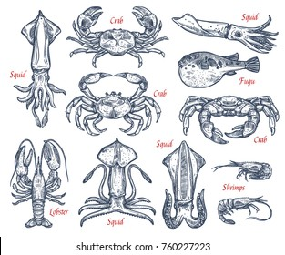 Sea animal, fish and crustacean sketch set. Crab, lobster, fugu fish, shrimp, squid and prawn, seafood isolated vector icon for fishing emblem, fish market label, seafood restaurant design