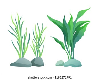 Sea or aquarium algae types vector illustration set on white. Straight and wavy seaweed with large and small leaved, green and violet colored poster.