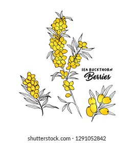 Sea buckthorn branches hand drawn vector illustration. Hippophae berry twigs ink pen sketch. Outline drawing cliparts set. Sea buckthorn yellow berries with lettering. Isolated doodle design elements