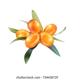 Sea buckthorn isolated on the white. Vector illustration in 3d style. The concept of realistic image of medical plants, herbs. Designed to create package of health, beauty natural products.