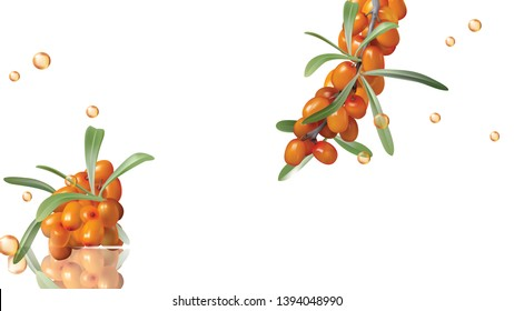 Sea buckthorn yellow ripe berries and green leaves, set isolated on white background. Collection of juicy sea-buckthorn fruit and liquid golden oil drops design element for food or cosmetics packaging