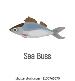 Sea buss fish color isolated on white icon