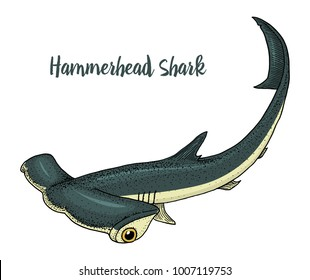 sea creature hammerhead shark. engraved hand drawn in old sketch, vintage style. nautical or marine, monster or fish. animals in the ocean.